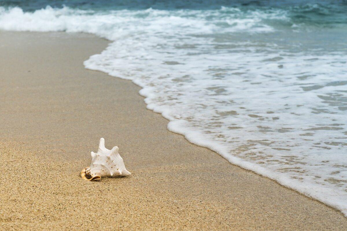 Imagen de concha en la arena de la playa
