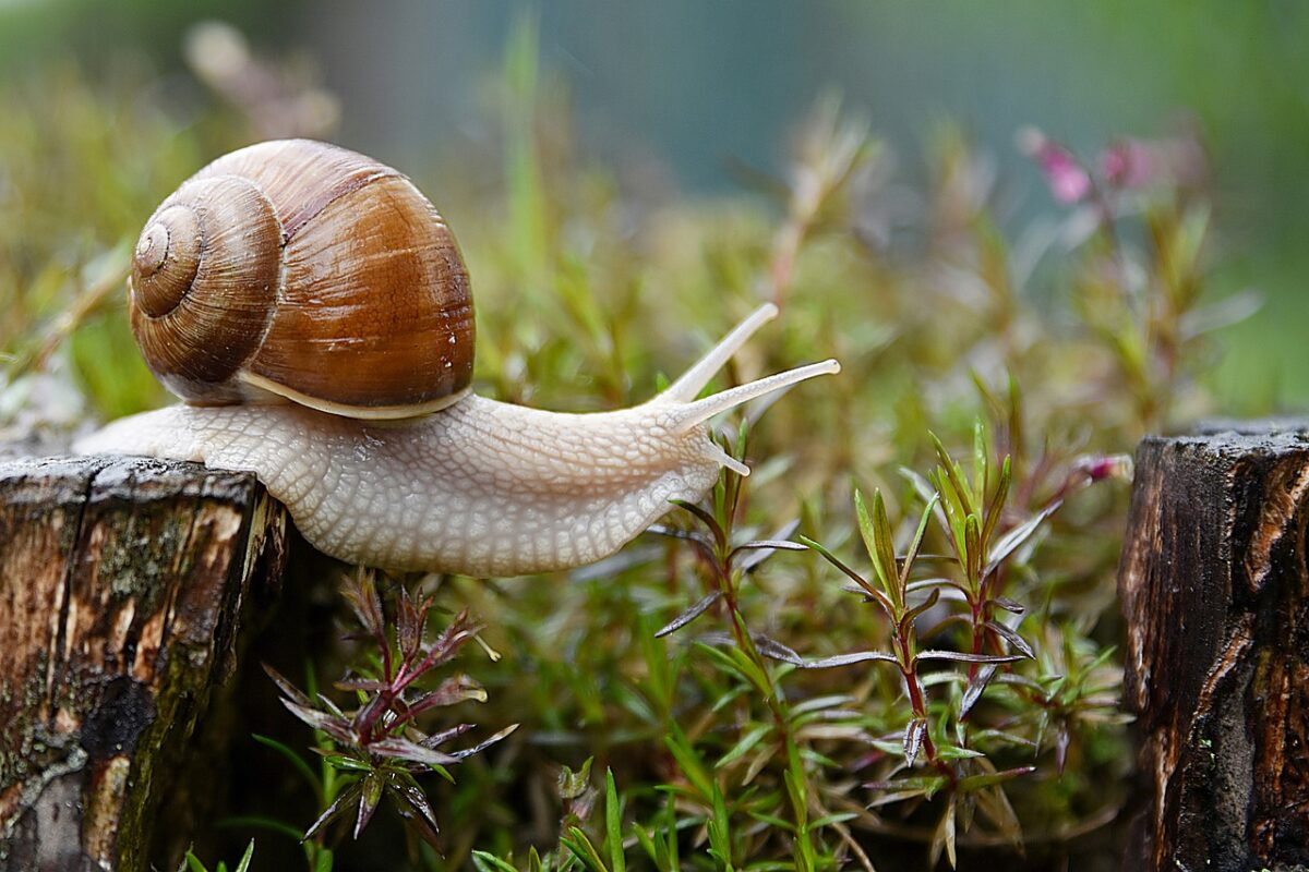 Decrecimiento caracol slow