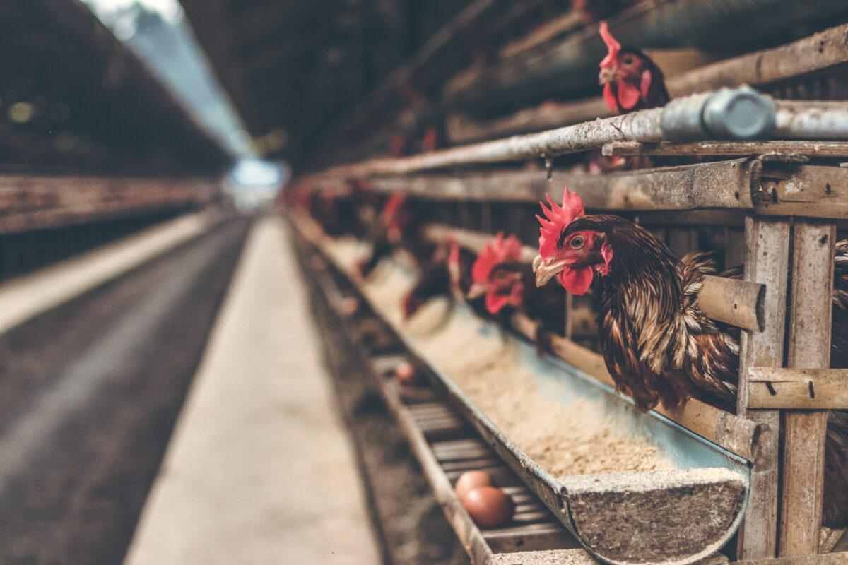 pandemia externalidad de la agroindustria